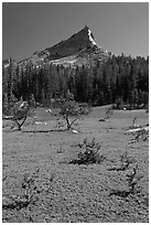 Meadow and Tressider Peak. Yosemite National Park ( black and white)