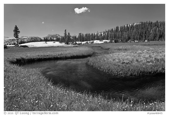 Wildflowers and stream in alpine meadow near Lower Cathedral Lake. Yosemite National Park (black and white)