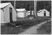 Tuolumne Lodge tents. Yosemite National Park, California, USA. (black and white)