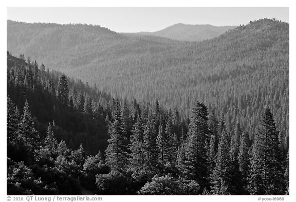 Hills covered in forest, Wawona. Yosemite National Park (black and white)