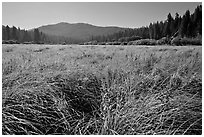 Wavona meadow in summer, morning. Yosemite National Park, California, USA. (black and white)