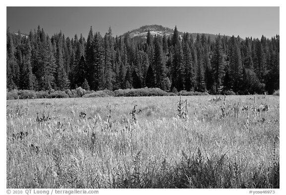 Wawona Dome viewed from Wawona meadow. Yosemite National Park (black and white)