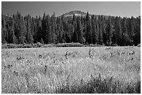 Wawona Dome viewed from Wawona meadow. Yosemite National Park, California, USA. (black and white)