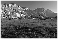 Meadow with summer flowers, North Peak crest. Yosemite National Park, California, USA. (black and white)