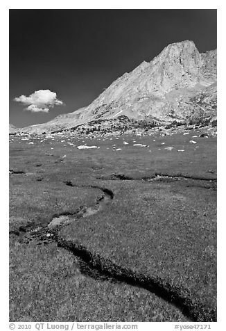 Alpine meadows, meandering stream, and Mount Conness. Yosemite National Park (black and white)