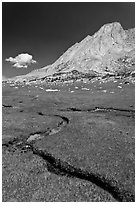 Alpine meadows, meandering stream, and Mount Conness. Yosemite National Park ( black and white)