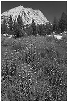 Flowers, forest, and peak. Yosemite National Park, California, USA. (black and white)