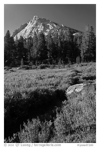 Sub-alpine landscape with stream, flowers, trees and mountain. Yosemite National Park (black and white)