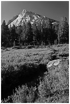 Sub-alpine landscape with stream, flowers, trees and mountain. Yosemite National Park ( black and white)