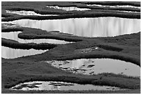 Ponds and reflections, late afternoon. Yosemite National Park ( black and white)