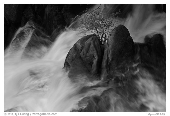 Tree on boulders surrounded by tumultuous waters, Cascade Creek. Yosemite National Park (black and white)