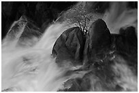 Tree on boulders surrounded by tumultuous waters, Cascade Creek. Yosemite National Park, California, USA. (black and white)