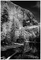 East Face of El Capitan and Merced River in winter. Yosemite National Park, California, USA. (black and white)