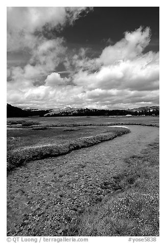 Stream in Tuolumne Meadows. Yosemite National Park (black and white)