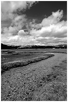 Stream in Tuolumne Meadows. Yosemite National Park ( black and white)