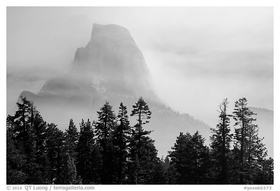 Half-Dome, clearing fog. Yosemite National Park (black and white)