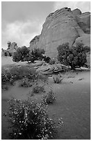 Wildflowers, sand and rocks, Klondike Bluffs. Arches National Park, Utah, USA. (black and white)