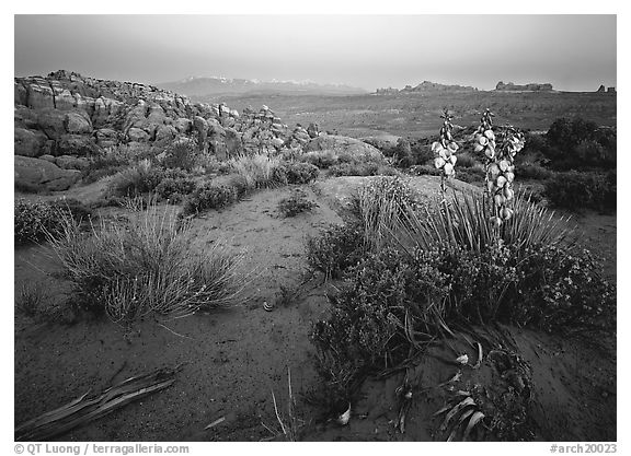 Yucca, Fiery Furnace, and La Sal Mountains, dusk. Arches National Park (black and white)