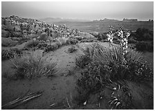 Yucca, Fiery Furnace, and La Sal Mountains, dusk. Arches National Park, Utah, USA. (black and white)