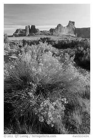 Shrub, cottonwoods and sandstone towers. Arches National Park (black and white)