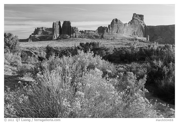 Shrub, cottonwoods and sandstone fins. Arches National Park (black and white)