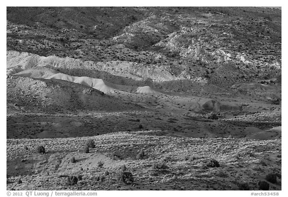 Last light on shrubs and rocks. Arches National Park (black and white)