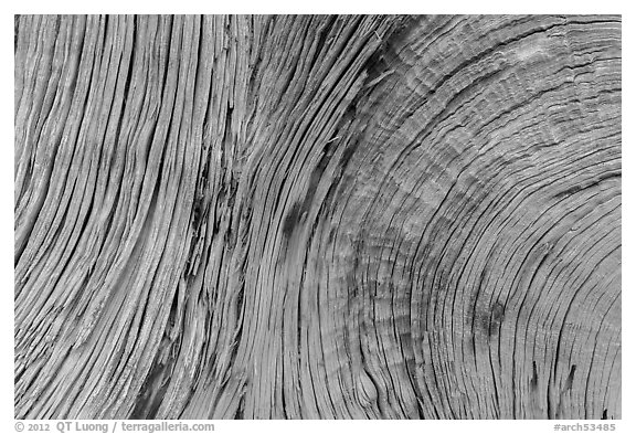 Close-up of juniper bark. Arches National Park (black and white)