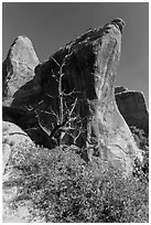 Juniper tree and fins. Arches National Park, Utah, USA. (black and white)