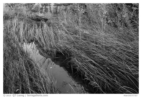 Creek and grasses flattened by water, Courthouse Wash. Arches National Park (black and white)