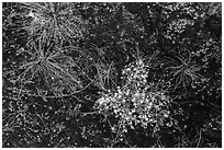 Ground view: wildflowers and mosses, Courthouse Wash. Arches National Park, Utah, USA. (black and white)