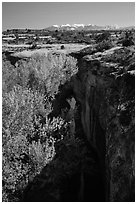 Cottonwood trees, Courthouse Wash creek and cliffs, La Sal mountains. Arches National Park, Utah, USA. (black and white)
