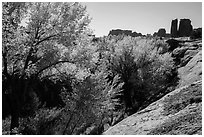 Cottonwoods in fall, Courthouse Wash and Towers. Arches National Park, Utah, USA. (black and white)