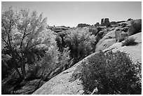 Bush and cottonwoods in autumn, Courthouse Wash and Towers. Arches National Park, Utah, USA. (black and white)