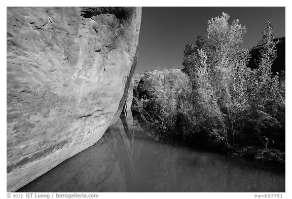 Cliff and vegetation reflected in stream, Courthouse Wash. Arches National Park (black and white)