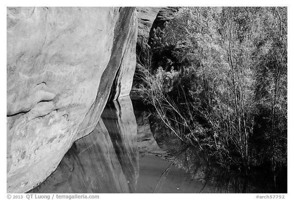 Cliffs and riparian vegetation reflected in stream, Courthouse Wash. Arches National Park (black and white)
