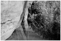 Cliffs and riparian vegetation reflected in stream, Courthouse Wash. Arches National Park, Utah, USA. (black and white)