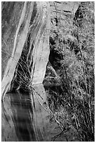 Sandstone walls, willows, and reflections, Courthouse Wash. Arches National Park ( black and white)