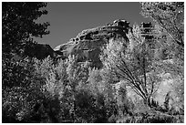 Cottonwood trees in autumn framing cliffs, Courthouse Wash. Arches National Park, Utah, USA. (black and white)