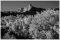 Cottonwood trees in fall foliage below red rock cliffs, Courthouse Wash. Arches National Park, Utah, USA. (black and white)