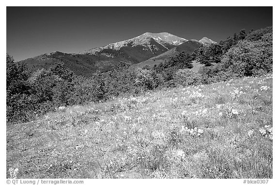 Meadow and distant peak, Mesa inclinado, North rim. Black Canyon of the Gunnison National Park (black and white)