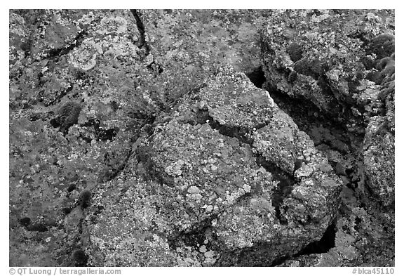 Gneiss and lichen. Black Canyon of the Gunnison National Park (black and white)
