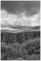 Flowers, canyon, and menacing clouds, Gunnison Point. Black Canyon of the Gunnison National Park, Colorado, USA. (black and white)