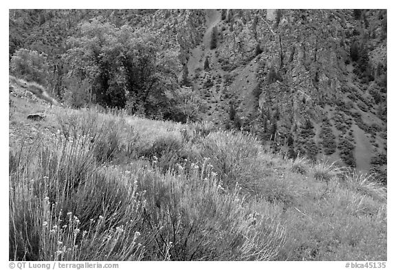 Grasses and canyon walls, East Portal. Black Canyon of the Gunnison National Park (black and white)
