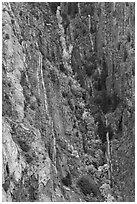 Trees in autumn color in steep gully. Black Canyon of the Gunnison National Park ( black and white)