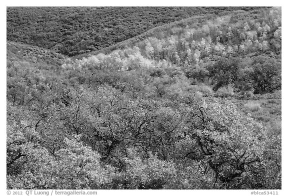 Hills with trees in autumn color. Black Canyon of the Gunnison National Park (black and white)