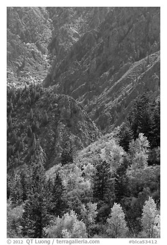 Trees in autumn foliage and canyon. Black Canyon of the Gunnison National Park (black and white)