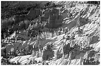 Hoodoos and snow in Bryce Amphitheater, early morning. Bryce Canyon National Park, Utah, USA. (black and white)