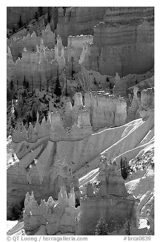 Snowy ridges and hoodoos, Bryce Amphitheater, early morning. Bryce Canyon National Park (black and white)