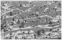 Ridges, snow, and trees. Bryce Canyon National Park, Utah, USA. (black and white)