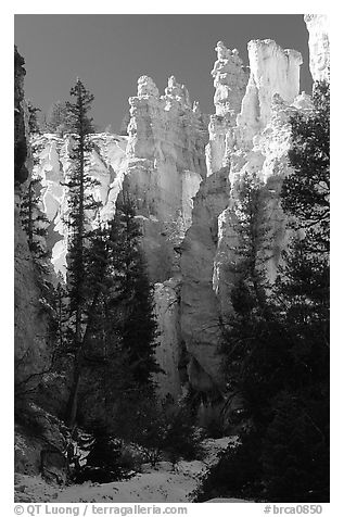 Hoodoos seen from  Queen's garden Trail. Bryce Canyon National Park (black and white)